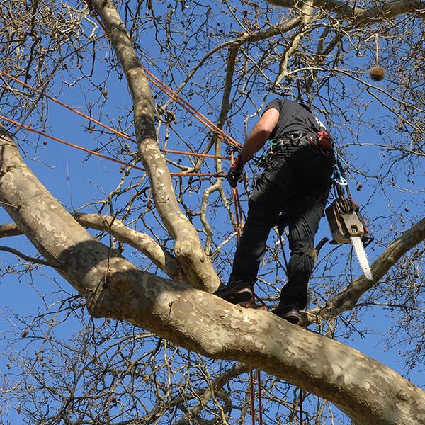 Elagage et abattage d'arbres à Carcassonne